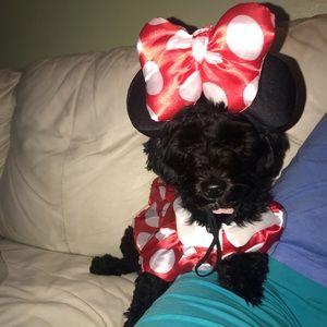 Minnie dog Halloween costume